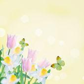 Vykort med påskliljor och tulpaner — Stockfoto