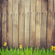 Stock Photo: Old wooden fence and grass