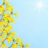 Postcard with flowering bush — Stock Photo
