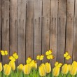 Stock Photo: Wooden fence with yellow tulips and butterflies
