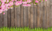 Almond flowers and grass against wooden background — Stock Photo