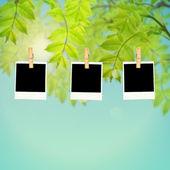 Lege fotolijsten tegen groene bladeren — Stockfoto