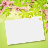 Primavera di foglie e fiori di mandorlo — Foto Stock