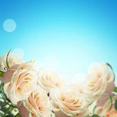 Postcard with elegant roses — Stock Photo