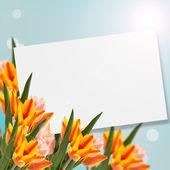 Pocztówka z tulipany — Zdjęcie stockowe