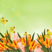 открытка с тюльпанами — Стоковое фото