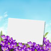 Postkarte mit krokus — Stockfoto
