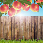 Apples and texture — Zdjęcie stockowe