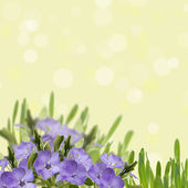 Abstract background with periwinkle  flowers — Stock Photo