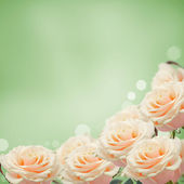 Border from fresh roses — Stock Photo