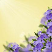 Pohlednice s čerstvými květinami — Stock fotografie