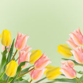Postcard with fresh flowers tulips  and empty  place for your te — Stockfoto