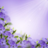 Tarjeta postal con flores frescas — Stok fotoğraf