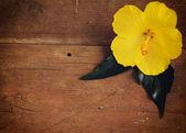 Flor amarilla sobre fondo de madera — Foto de Stock