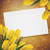 Postcard with fresh flowers tulips  and empty  place for your te — Stock Photo