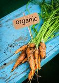 świeże marchewki z liści — Zdjęcie stockowe