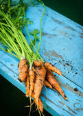 Zanahorias frescas con hojas — Foto de Stock