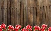 Old wooden fence and flowers.  — Stock Photo