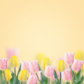 Fresh tulips on yellow background. — Стоковое фото