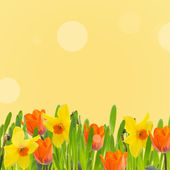 Tulips and daffodils in grass — ストック写真