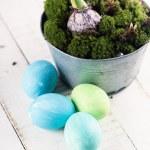 Easter eggs, moss, bulbs. — Stock Photo #43319081
