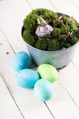 Easter eggs, moss, bulbs. — Stock Photo
