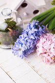 Fresh hyacints — Stock Photo
