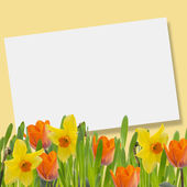 Tulips and daffodils in grass — Stock Photo