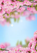 Postcard with fresh spring flowering tree — Stock Photo