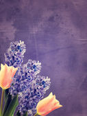 Fresh hyacinths and tulips — Stock Photo