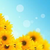 Cartolina con fiori eleganti — Foto Stock