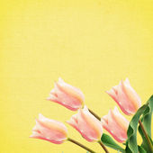 Postcard with tulip flowers — Stock Photo