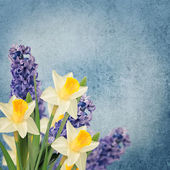 Holiday background with spring flowers — 图库照片