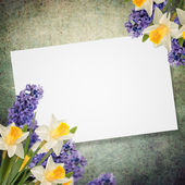 Holiday background with spring flowers — Stock Photo