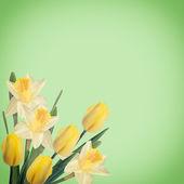 Kartpostal zarif çiçekler — Stok fotoğraf