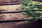 Grass in dew — Stock Photo