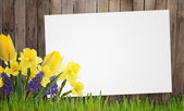 Old wooden fence and grass, flowers. — Stock Photo