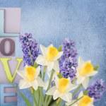 Spring flowers — Stock Photo #44654631