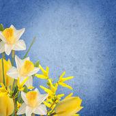 鲜花背景 — 图库照片