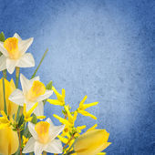 Flowers background — Foto Stock