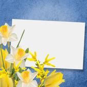 Flowers background — Stok fotoğraf