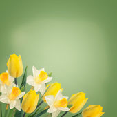 Flowers background — Stockfoto