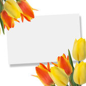 Postcard with tulips — Stock fotografie