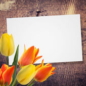 Postcard with tulips — Foto de Stock