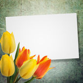 Postcard with tulips — Foto Stock