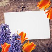 Květiny pozadí — Stock fotografie