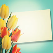 Postcard with tulips — Stock Photo