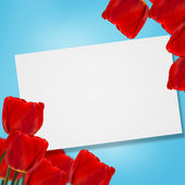 Postcard with tulips — Stok fotoğraf