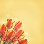 Postcard with tulips — Φωτογραφία Αρχείου