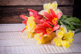 Tulips and daffodils — Stock fotografie